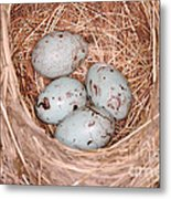 Red-winged Blackbird Nest Metal Print