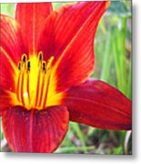 Red Yellow Lily Metal Print