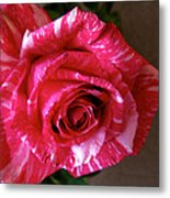 Red Zebra Rose  Metal Print
