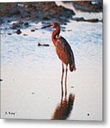 Reddish Egret Basking In The Sunset Metal Print