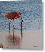 Reddish Egret Checking It Out Metal Print