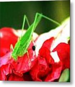 Reds And Green Metal Print