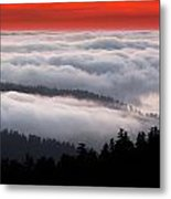 Redwood Clouds Metal Print