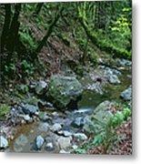 Redwood Creek Art Metal Print