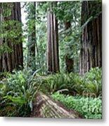 Redwood National Park, California Metal Print