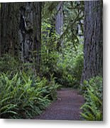 Redwood Path Metal Print