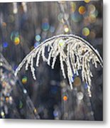 Reed With Frost And And Color Metal Print