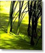Reeds In Pond Metal Print