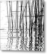 Reeds On The Turtle Flambeau Flowage Metal Print