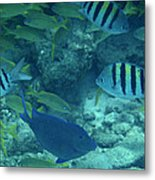 Reef Fish Metal Print