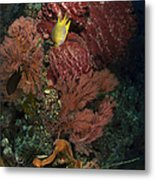 Reef Sponge Coral And Yellow Fish Metal Print