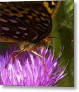 Reflection In The Wing Metal Print