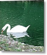 Reflection Of A Swan Metal Print