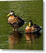 Reflection On The River Metal Print