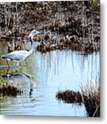 Reflections Of A Blue Heron Metal Print