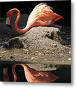 Reflections Of A Flamingo Metal Print