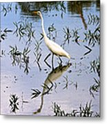 Reflections Of A White Bird Metal Print