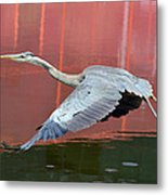 Reflections Of Russet Metal Print