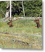 Relaxed Elk Metal Print