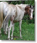 Reluctant Look Metal Print