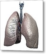Respiratory Anatomy, Artwork Metal Print
