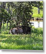 Resting In The Clover Metal Print