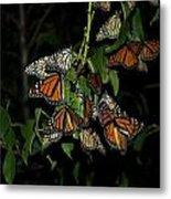 Resting Monarchs Metal Print