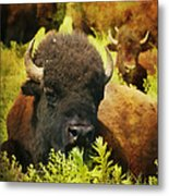 Resting Time Metal Print by Iris Greenwell