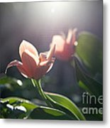 Reverence Metal Print by Rossi Love