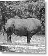 Rhino In Black And White Metal Print