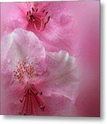 Rhododendron Dreams Metal Print