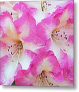 Rhododendron- Hot Pink Metal Print
