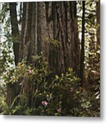Rhododendrons Bloom Around The Trunk Metal Print