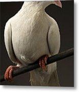 Ring-necked Dove Metal Print