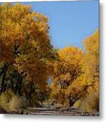 Rio Grande Cottonwoods Metal Print by Denice Breaux
