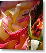Rio Samba Rose And Bud Metal Print