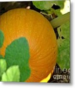 Ripe On The Vine Metal Print