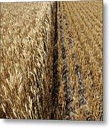 Ripened Wheat And Stubble In Saskatchewan Field Metal Print
