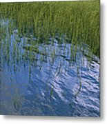 Rippling Water Among Aquatic Grasses Metal Print