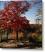 River Tree Metal Print