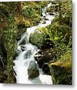 River With Trees In The Forest Metal Print