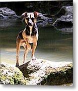 Riverdog Metal Print