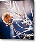 Road Side Plant Metal Print