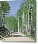 Road Through An Aspen Forest, Manti La Metal Print