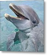Roatan, Bay Islands, Honduras A Metal Print