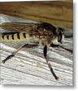 Robber Fly Metal Print