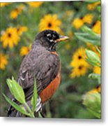 Robin Among Flowers Metal Print