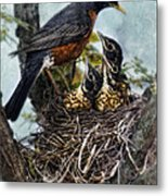Robin And Babies In Nest Metal Print