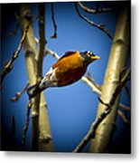 Robin Dives Into A Budding Spring Metal Print