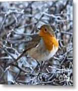 Robin On A Frosty Morning Metal Print